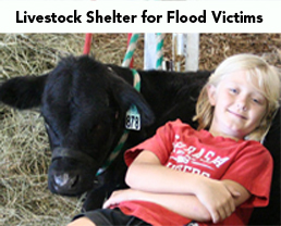 livestock shelter featured
