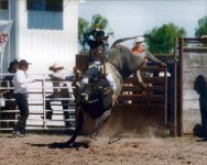 Chas Skillett Bull Riding
